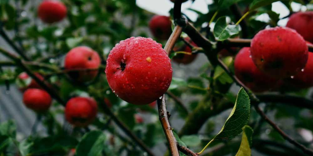 Fruits fro Diabetes