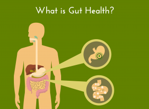 What is gut health?