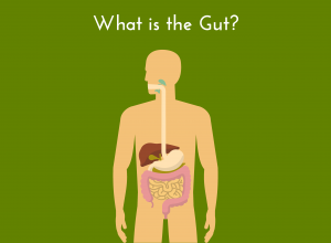 what is gut?